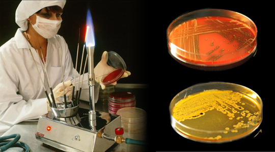 01 bacteriological-research